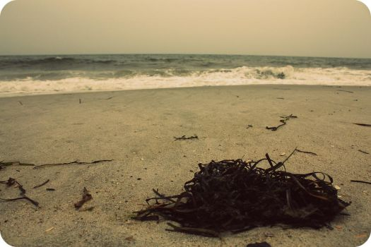 Washed Ashore by RiaRoseKnows