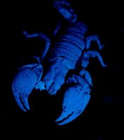 Red Claw Black Light by hellfire321