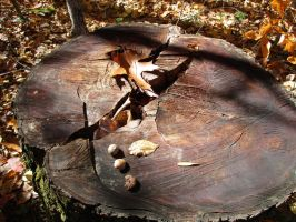 Squirrel Table by seaglasshunter