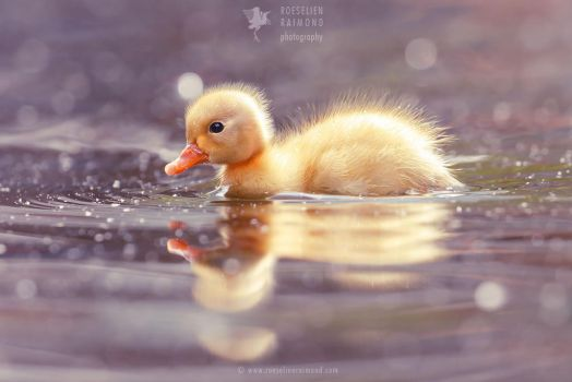 Cute Power - Yellow Duckling by thrumyeye