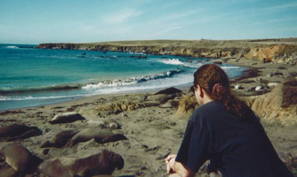 Elephant Seals and me by TimBakerFX