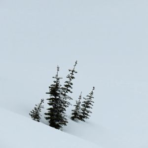 Tree Tops in Snow by videodude1961
