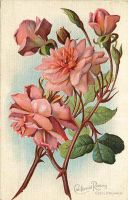 California Wild Flowers - Californian Roses by Yesterdays-Paper