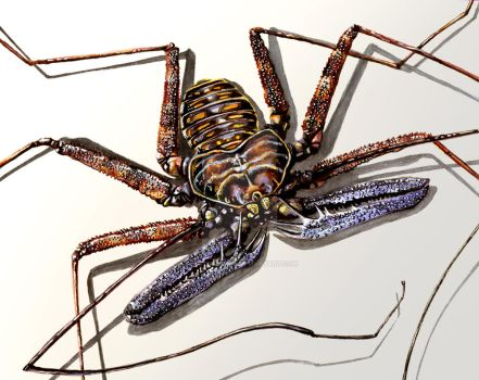 Tailless Whip Scorpion by bigredsharks