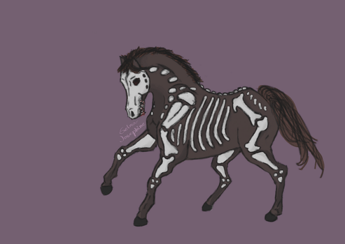 Skeleton Horse by Selma-Josephine