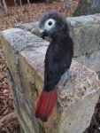 Needle Felted African Grey Semi-posable Sculpture by FeatheredFauna