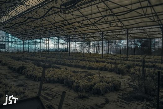 Abandoned greenhouse pt3 by jst-pictures