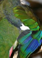Feather Macro by Slaneyder