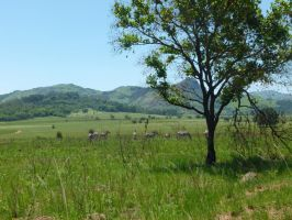 Game Reserve in Swaziland by frayzoid