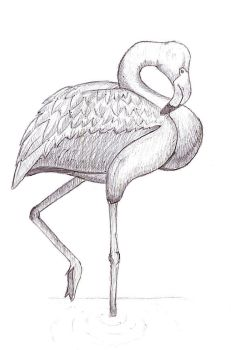 Flamingo by sithgens