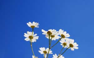 Flowers and a blue sky by lassekongo83