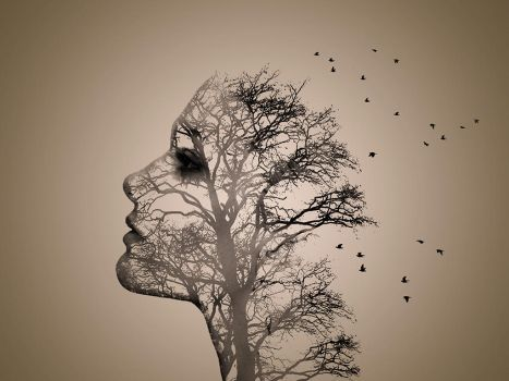 Model - Tree Face by jasconnor