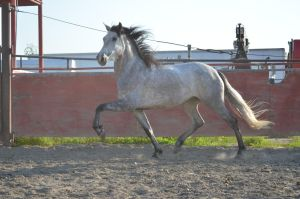 DWP FREE HORSE STOCK 216 by DancesWithPonies