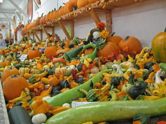 Fall Harvest at the Fair by WDWParksGal-Stock