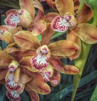 Orchids in Color by creativemikey