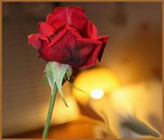 Sunday Rose by GLO-HE
