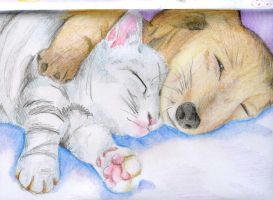 Cute animals x3 kitty n dog by NanakoHarrison