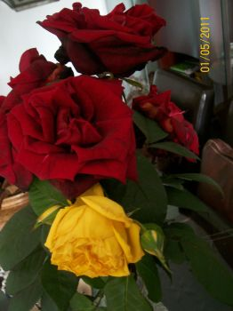 Roses, 23th April 2011 by mkaden013