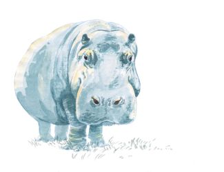 Hippo--Watercolour by artofMilica