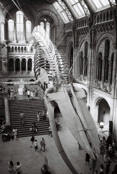 London Natural History Museum by dRRew