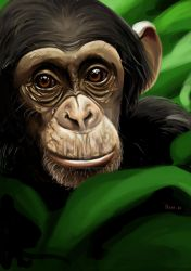 chimp by hansbrown-77
