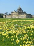 Castle Howard Daffodils stock by Queenselphie