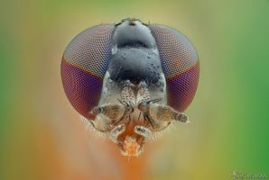 Fly (ID TBA) by AlHabshi