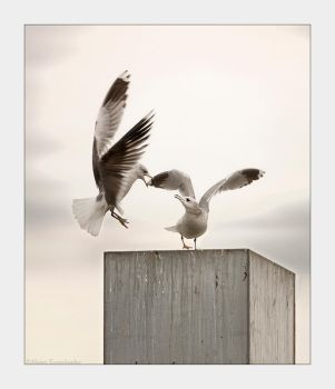 Gulls by TND-Photography