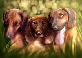 Commission #22 - Bavarian Mountain Hounds by Martith