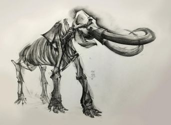 Colombian Mammoth 2017 by MinohKim