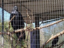 Folsom City Zoo Photo Series 6 by lilly-peacecraft