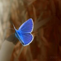 Blue Version II by Callu