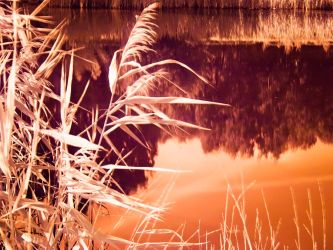 infrared reed by JustOldPurpleAngel
