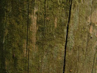 Wood Texture 09. by stock-basicality