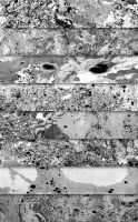 25 Black White Marble Paint Textures by saimana