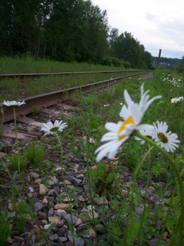 Down By The Tracks. by yellowsubmarinex