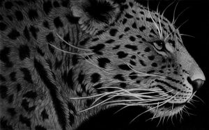 Whiskers - Pencil Sketch by Golphee
