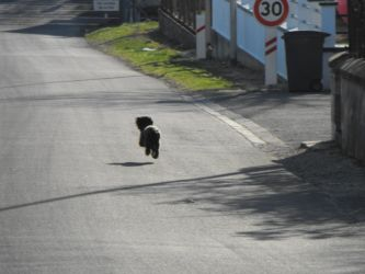 Speeding Hover Dog by CorianderCollecter