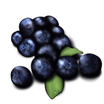 Blueberries by TokoTime