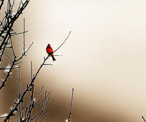 Composition with a Bird by Callu