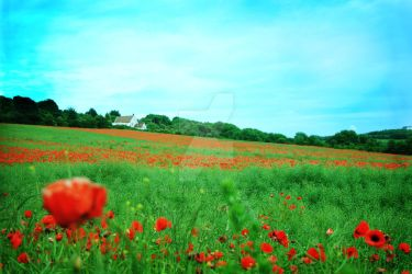 Poppies by Michael-Wolfendale