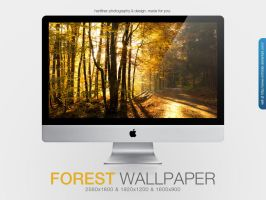Forest Wallpaper by MrFolder