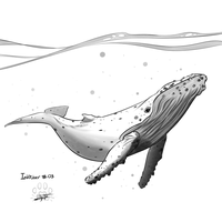 Inktober 03 : humpback whale by Lily-Fu