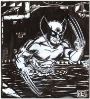 Wolverine in the sewer by Brian-Evinou