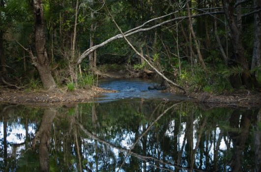 mangrove trees by kcjc62