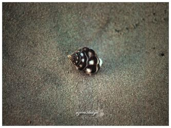 Lonely Snail by pucukpaku