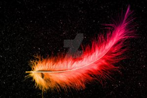 Feather in the night by WongTorok