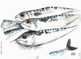 Mackerel by ExIllustrated