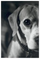 Dottie the Dog02 by nibbler-photo