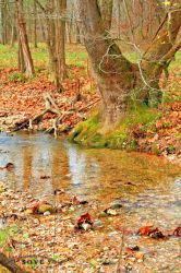 Creek by SOVEPhotography